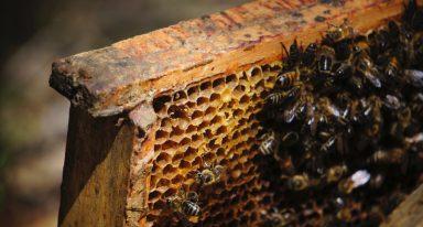 Pszczoły sercem ekosystemu